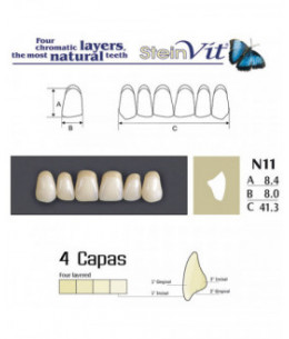 DIENTES STEINVIT N11 UP A2